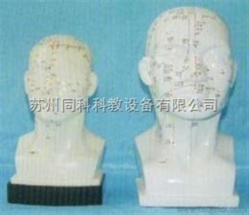 22cm頭針模型