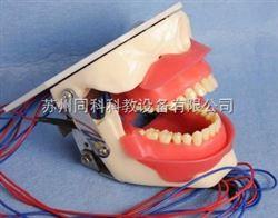 TKOSS麻醉和拔牙实习模型