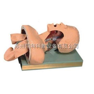 TK/50S高級人體氣管插管訓練模型