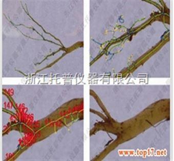 GXY-A根系分析仪研究红豆草根系情况