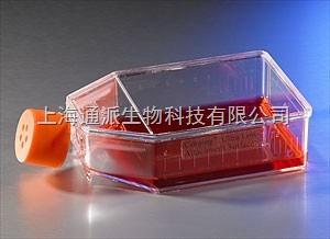 肾小管内皮细胞HK2细胞