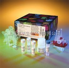 大鼠游离三碘甲状腺(FT3) ELISA试剂盒上海现货供应,提供一对一咨询