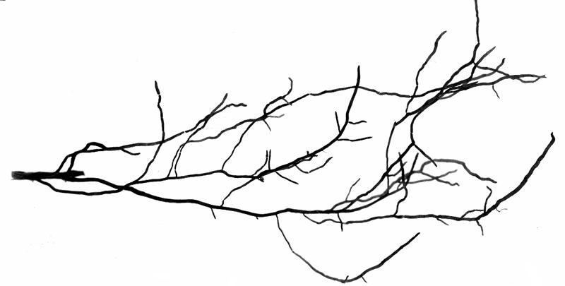 a型手绘款式图