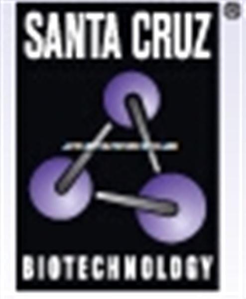 Santa cruz抗体价格