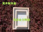 昆虫标本盒 实木标本盒 刷本漆 植保标本盒