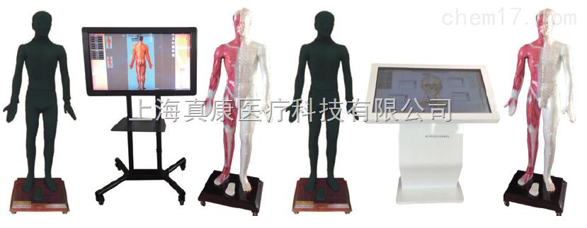 多媒体人体针灸穴位交互数字平台(针灸针刺推拿)