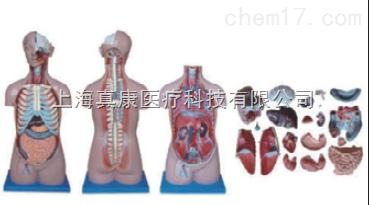 无性躯干模型20件(人体骨骼)