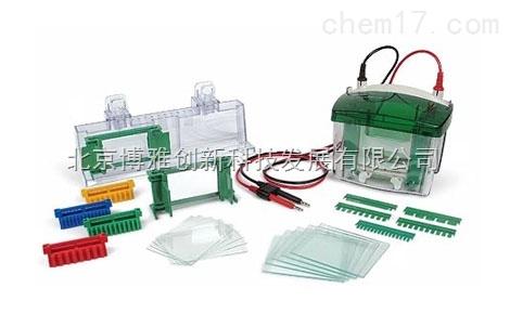 Bio-Rad   Mini-PRO Tetra 電泳槽