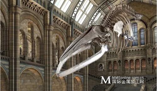 CREAFORM形创:伦敦自然历史博物馆:蓝鲸骨架3D扫描