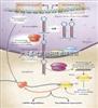 miRNA定量检测厂家